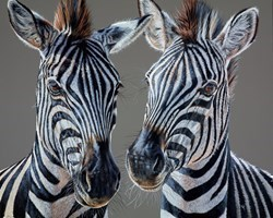 Racing Stripes by Gina Hawkshaw -  sized 30x24 inches. Available from Whitewall Galleries